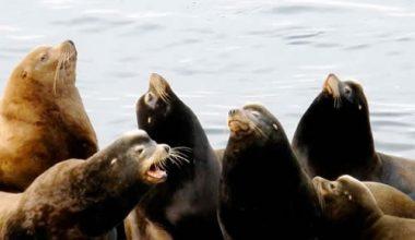 seals-at-entrance-island